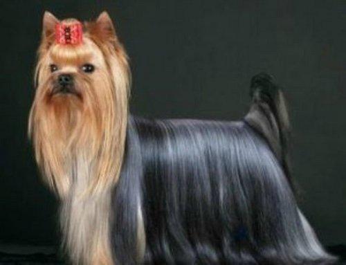 Маленькие породы собак с названием описанием и фото